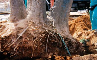 ¿Qué consejos no se me tienen que olvidar cuando plante árboles?
